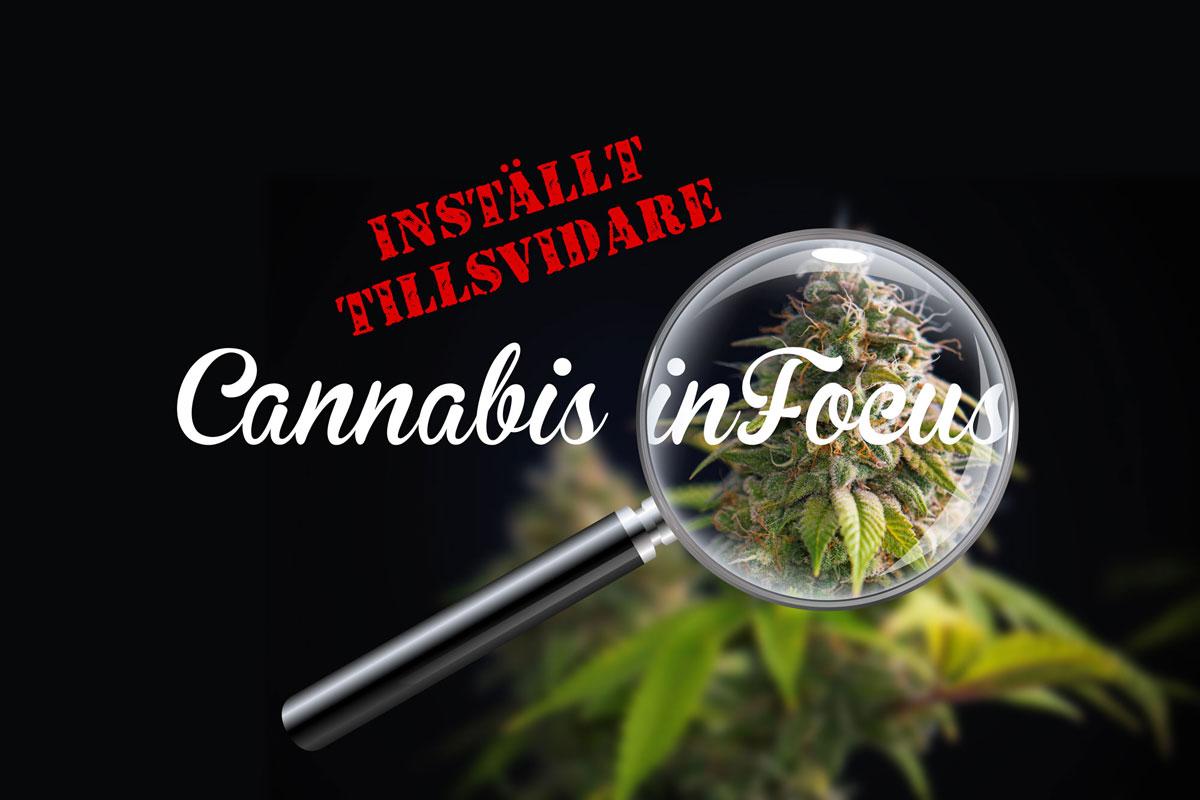 Cannabis_in_focus_installt